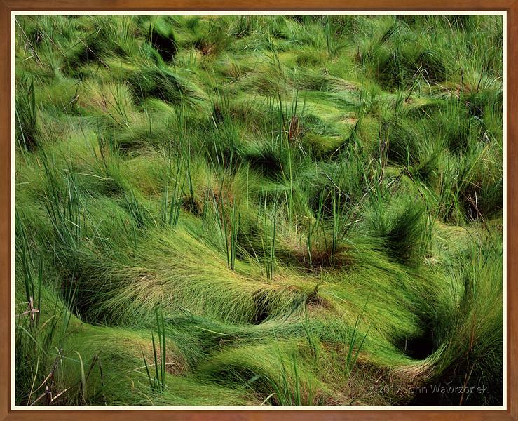 Green Sashay
