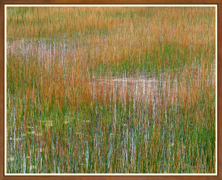 Reeds and Water Lilies II