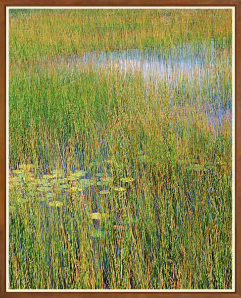 Reeds & Cloud Reflections I