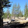 Tuolumne Meadows, Yosemite, Ca