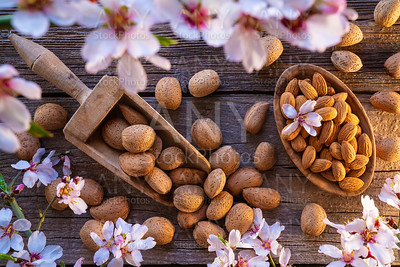 Almond spring blossom harvest on wood