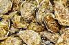 Oysters seafood texture pattern