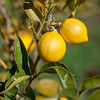 Rooster Ridge Organics - Santa Cruz (3 of 30)