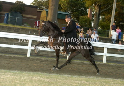 CLASS 23  FOUR YR OLD OPEN SPECIALTY
