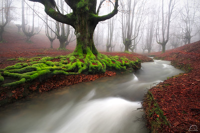 RIVER OF LIFE   ( FIAP Honorable mention, Landscapes category.EUROPA 2014 ).