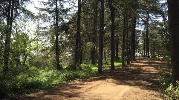 Cedar Grove - Vista Del Valle