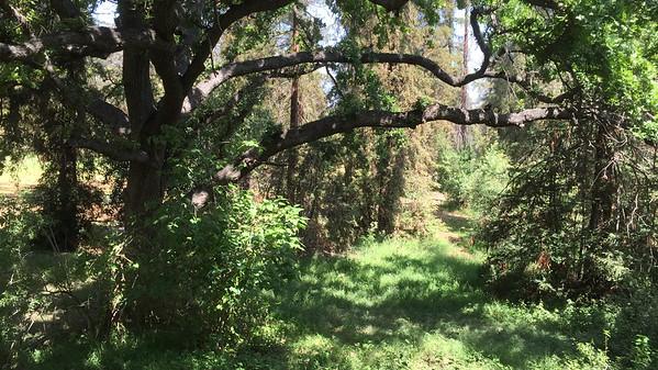Oak Grove - Wilson Harding GC