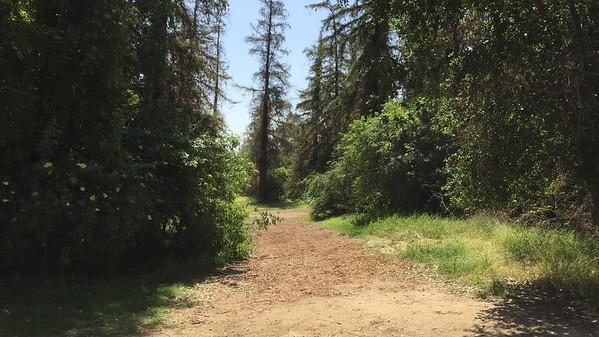 Redwoods Area - Wilson Harding GC