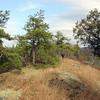 Port-Jervis-Deerpark45_Nov05-2006