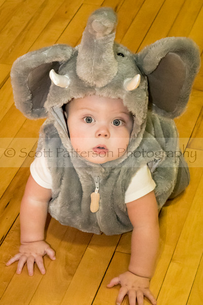Noah Miller, who's first birthday will be October 31st, shows off his elephant costume during the Rochester Recreation Department's Halloween Party in Rochester Saturday. Photo by Scott Patterson/Fosters.com