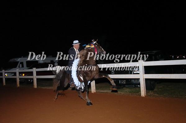 CLASS 35- WALKING HORSE CHAMPIONSHIP