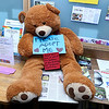 The Fitchburg Public Library is collecting teddy bears that you can adopt on February 18, 2017  at their Winterfest Celebration. SENTINEL & ENTERPRISE/JOHN LOVE