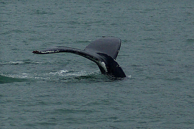 Whale of a tail, or is that tail of a whale?