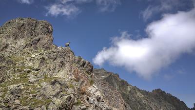 "Between Planpraz, black lakes (Lacs noirs) and the Index. Ibex at the ""Col de Lacs noirs."""