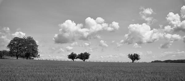 20200524 Ars sur Formans randonnée (Saint-Didier-de-Formans/Auvergne-Rhône-Alpes/France - N45°58.040' E4°46.301' - Altitude : 231)