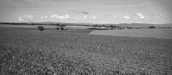 20200524 Ars sur Formans randonnée (Misérieux/Auvergne-Rhône-Alpes/France - N45°58.296' E4°49.540' - Altitude : 258)