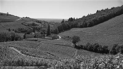 20200521 Chiroubles randonnée (Villié-Morgon/Auvergne-Rhône-Alpes/France - N46°10.627' E4°39.411' - Altitude : 363)