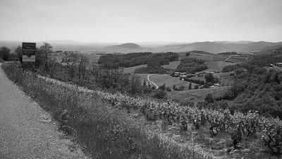20200521 Chiroubles randonnée (Fleurie/Auvergne-Rhône-Alpes/France - N46°11.538' E4°38.908' - Altitude : 537)