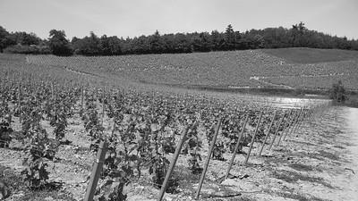 20200521 Chiroubles randonnée (Fleurie/Auvergne-Rhône-Alpes/France - N46°11.676' E4°40.195' - Altitude : 490)