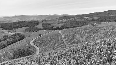 20200521 Chiroubles randonnée (Fleurie/Auvergne-Rhône-Alpes/France - N46°11.497' E4°39.210' - Altitude : 550)