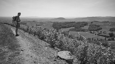 20200521 Chiroubles randonnée (Fleurie/Auvergne-Rhône-Alpes/France - N46°11.492' E4°38.974' - Altitude : 548)