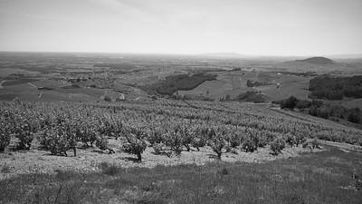 20200521 Chiroubles randonnée (Fleurie/Auvergne-Rhône-Alpes/France - N46°11.478' E4°39.047' - Altitude : 558)