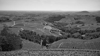 20200521 Chiroubles randonnée (Fleurie/Auvergne-Rhône-Alpes/France - N46°11.492' E4°39.210' - Altitude : 550)