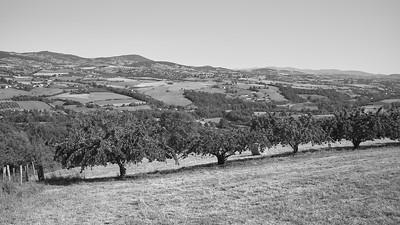 20200531 Courzieu La Brévenne randonnée (Filtre vert) (Chemin de la Voûte/Courzieu/Auvergne-Rhône-Alpes/France - N45°44.736' E4°33.597' - Altitude : 442m)