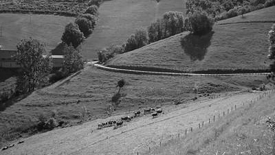 20200531 Courzieu La Brévenne randonnée (Filtre vert) (Chemin de la Voûte/Courzieu/Auvergne-Rhône-Alpes/France - N45°44.440' E4°33.245' - Altitude : 441m)