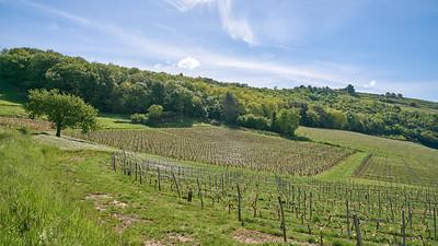"""Poncin et sa région - Randonnée - 46°5'17"""" N 5°26'7"""" E - 384,3m (Poncin - Auvergne-Rhône-Alpes)"""