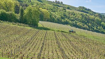 """Poncin et sa région - Randonnée - 46°5'17"""" N 5°26'9"""" E - 384,0m (Poncin - Auvergne-Rhône-Alpes)"""