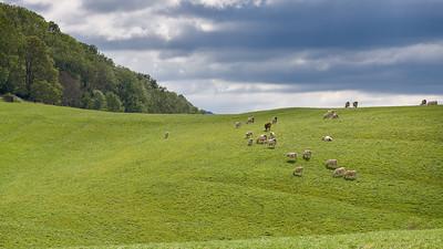 """Jujurieux et sa région Randonnée 2014 - 46°3'24"""" N 5°26'8"""" E - 529,4m (Jujurieux - Auvergne-Rhône-Alpes)"""