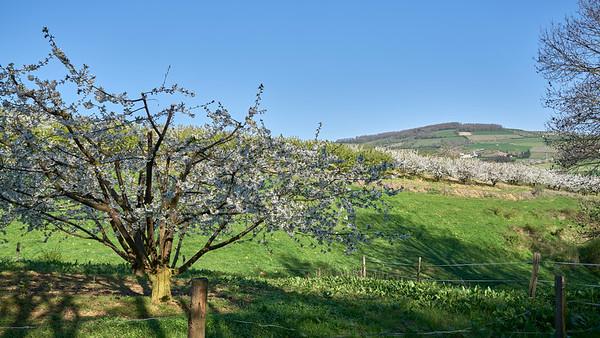 """Savigny et sa région. Randonnée - 45°48'35"""" N 4°33'56"""" E - 335,1m (Savigny - Auvergne-Rhône-Alpes)"""