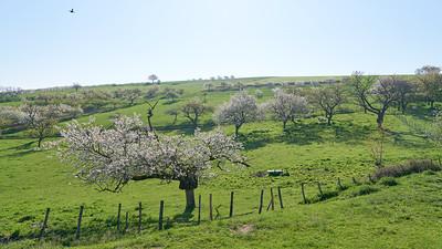 """Savigny et sa région. Randonnée - 45°48'28"""" N 4°33'49"""" E - 358,4m (Savigny - Auvergne-Rhône-Alpes)"""