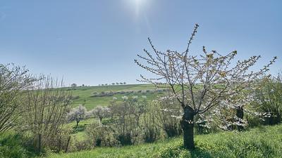 """Savigny et sa région. Randonnée - 45°48'28"""" N 4°33'47"""" E - 368,7m (Savigny - Auvergne-Rhône-Alpes)"""