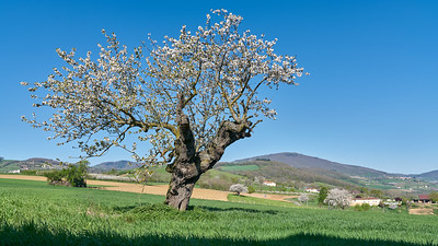 """Savigny et sa région. Randonnée - 45°48'23"""" N 4°33'40"""" E - 395,2m (Savigny - Auvergne-Rhône-Alpes)"""