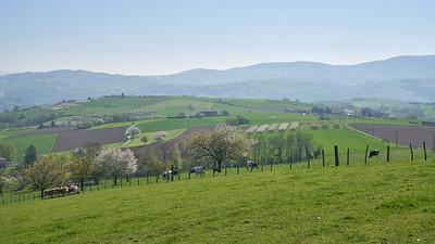 """Savigny et sa région. Randonnée - 45°48'27"""" N 4°33'7"""" E - 458,3m (Savigny - Auvergne-Rhône-Alpes)"""