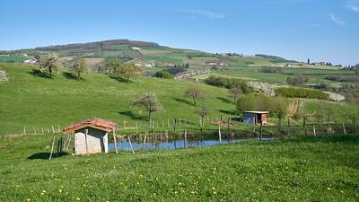 """Savigny et sa région. Randonnée - 45°48'31"""" N 4°33'53"""" E - 353,9m (Savigny - Auvergne-Rhône-Alpes)"""