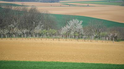 Anjou 2012