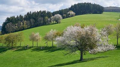 """Cublize / Ronno randonnée avril 2017 - 45°59'33"""" N 4°22'56"""" E - 562,8m (Ronno - Auvergne-Rhône-Alpes)"""