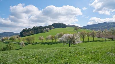 """Cublize / Ronno randonnée avril 2017 - 45°59'34"""" N 4°22'54"""" E - 559,6m (Ronno - Auvergne-Rhône-Alpes)"""