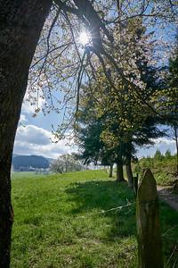 """Cublize / Ronno randonnée avril 2017 - 45°59'57"""" N 4°22'30"""" E - 492,1m (Ronno - Auvergne-Rhône-Alpes)"""
