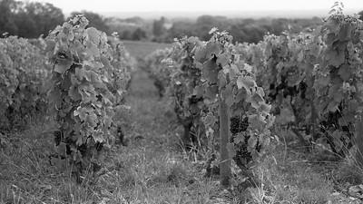20210925 Juliénas randonnée (Crêches-sur-Saône/Bourgogne-Franche-Comté/France - 46° 14.766' N 4° 45.326' E - 238.20m)
