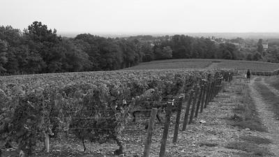 20210925 Juliénas randonnée (Crêches-sur-Saône/Bourgogne-Franche-Comté/France - 46° 14.764' N 4° 45.213' E - 253m)