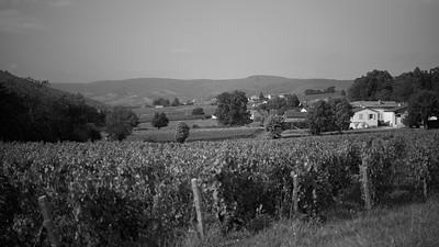 20210925 Juliénas randonnée (Crêches-sur-Saône/Bourgogne-Franche-Comté/France - 46° 14.616' N 4° 44.112' E - 272.40m)