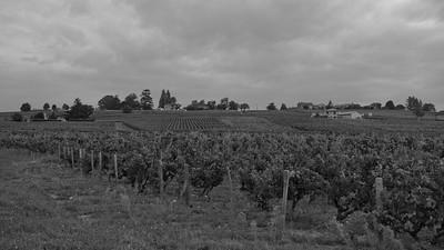 20210925 Juliénas randonnée (Crêches-sur-Saône/Bourgogne-Franche-Comté/France - 46° 14.449' N 4° 44.166' E - 258.50m)