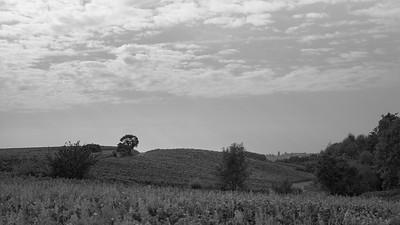 20210925 Juliénas randonnée (Crêches-sur-Saône/Bourgogne-Franche-Comté/France - 46° 14.419' N 4° 44.135' E - 255.30m)