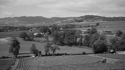 20210925 Juliénas randonnée (Crêches-sur-Saône/Bourgogne-Franche-Comté/France - 46° 15.601' N 4° 45.500' E - 283.10m)