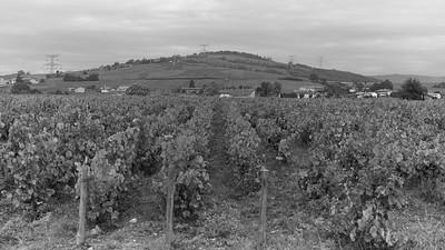 20210925 Juliénas randonnée (La Chapelle-de-Guinchay/Bourgogne-Franche-Comté/France - 46° 14.324' N 4° 44.009' E - 255m)