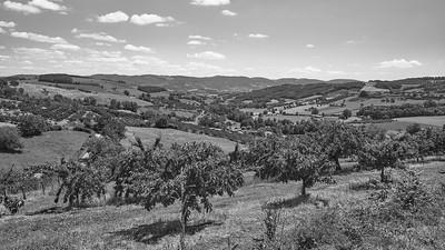 20200531 Savigny randonnée (Filtre vert) (/Saint-Romain-de-Popey/Auvergne-Rhône-Alpes/France - N45°50.081' E4°32.079' - Altitude : 474.52m)